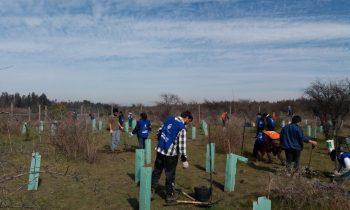 Facultad de Ingeniería y Negocios Participa en Proyecto de Reforestación